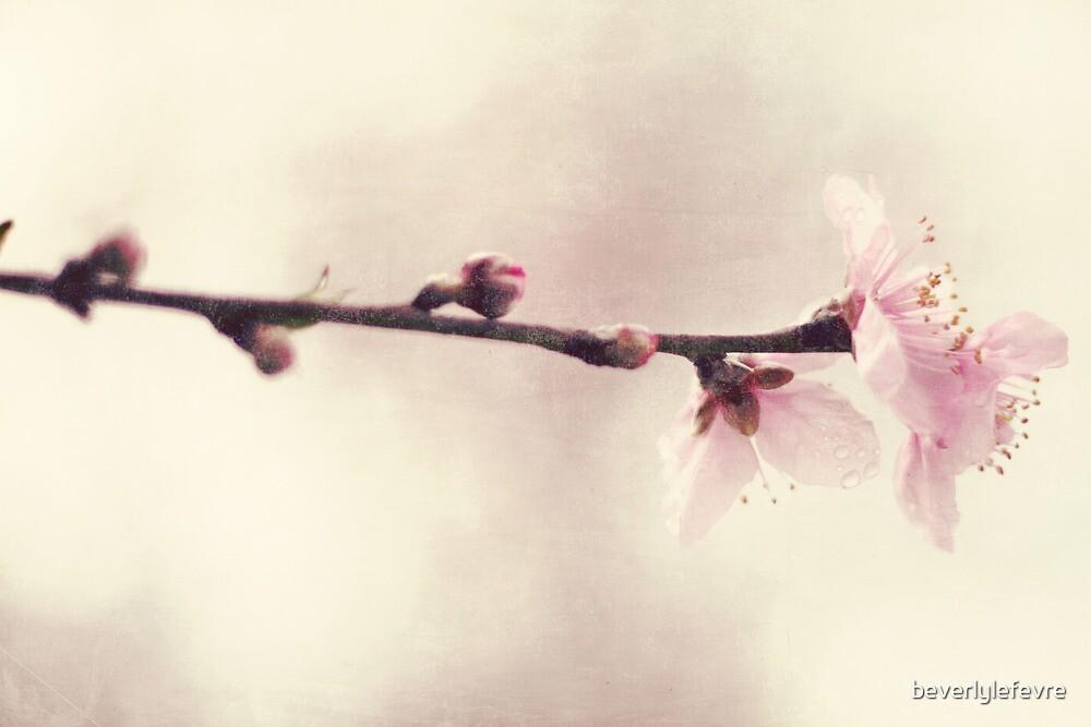 pink blossoms by beverlylefevre