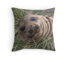 Young Seal Throw Pillow
