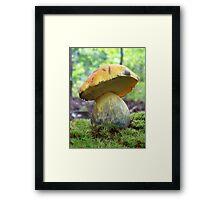 Yellow Bolete Framed Print