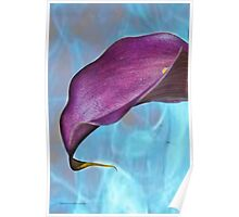 Calla Lily Typify Poster