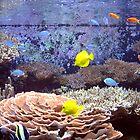 Seattle Aquarium by Jay Reed