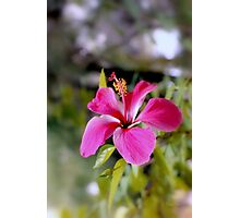 Bahamian Flower Photographic Print