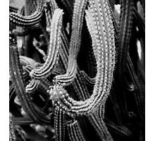 Cactus Tentacles Photographic Print