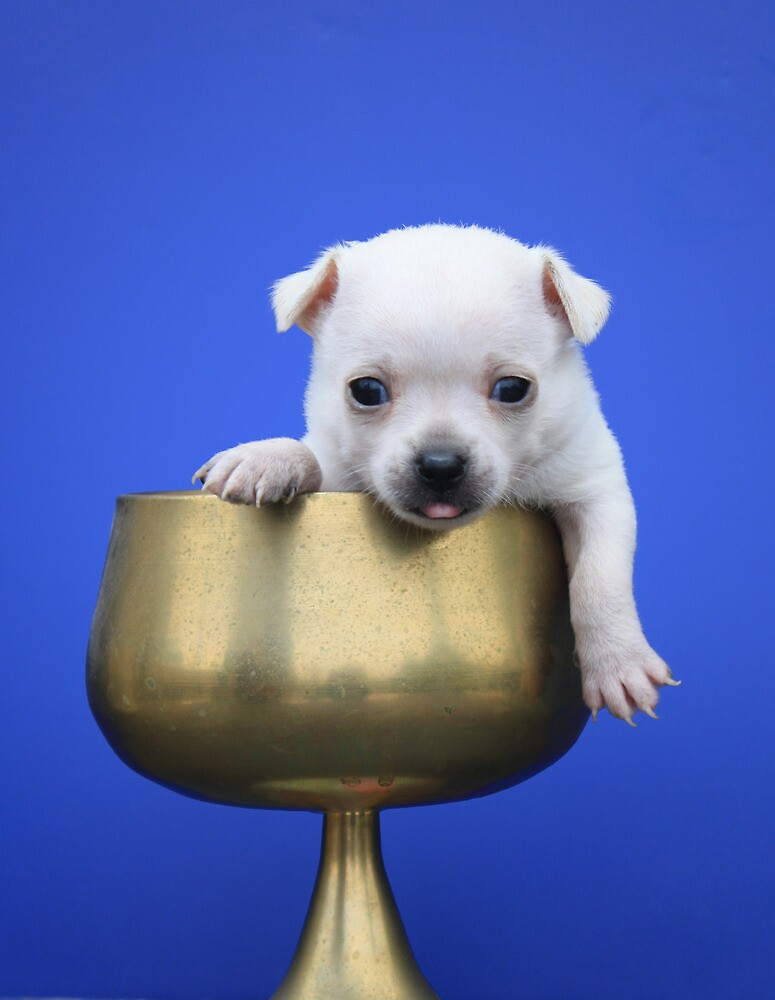 Another Pup In Another Cup by Carolyn  Fletcher