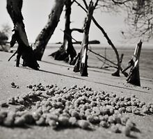 Coonah Crab Balls by Luke Griffin