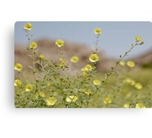 desert colours Canvas Print