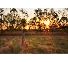Barbed Sunset Photographic Print