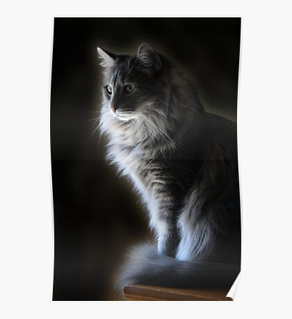 Backlit Kitty Poster