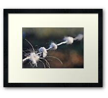 Barbed wire with pieces of white coat Framed Print