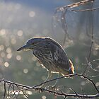 Sunset on Green Heron by NewfieKeith