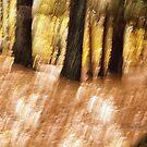 Trees - 24 - Impressions by Yannik Hay