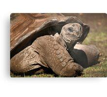 Wild Faces: Giant Tortoise Metal Print