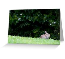 Wascally wabbit Greeting Card