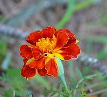 Dragon Flower - Red, Yellow and Orange by Sean Paulson