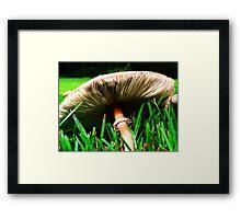 Nature's Parasol Framed Print