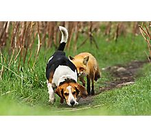 Probably the world\'s worst hunting dog Photographic Print