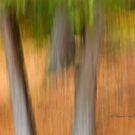 Trees - 16 - Impressions by Yannik Hay