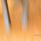 Trees - 15 - Impressions by Yannik Hay