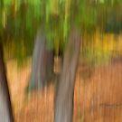 Trees- 11 - Impressions by Yannik Hay