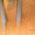 Trees - 8 - Impressions by Yannik Hay