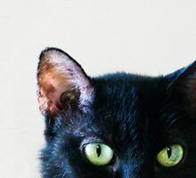 Black Cat Green Eyes by Glennis  Siverson