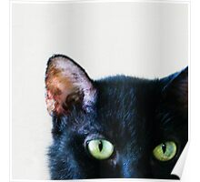 Black Cat Green Eyes Poster