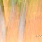 Trees - 7 - Impressions by Yannik Hay
