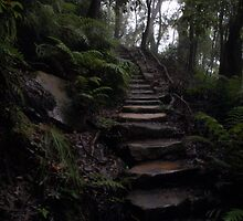 Forrest Stairs by AnthonyWilson