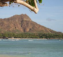 Diamond Head by Maurine Huang