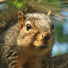 Wide-eyed and Bushy-tailed by lorilee