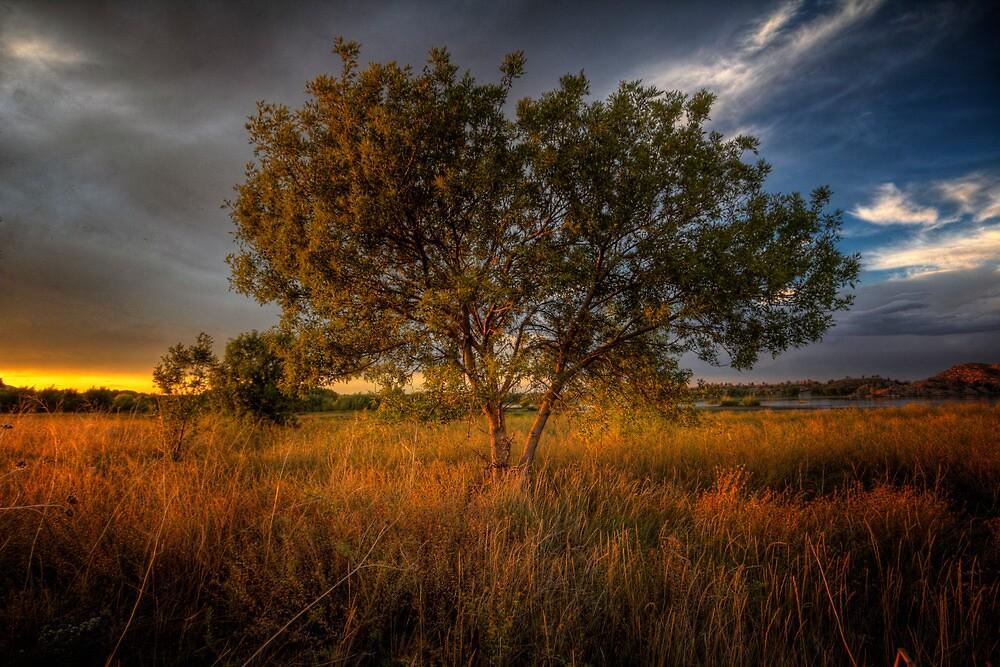 Sundown Tree by Bob Larson