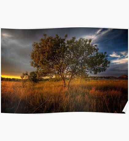 Sundown Tree Poster
