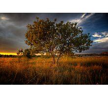 Sundown Tree Photographic Print