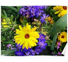 Cineraria and Daisy Poster