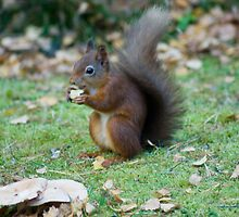 The Tail Of The Squirrel With Monkey Nuts by Jamie  Green