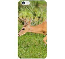Young Buck (Odocoileus virginianus) iPhone Case/Skin