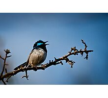 Singing Superbly Photographic Print