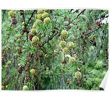 Dream Landscape - The Larch Tree Poster