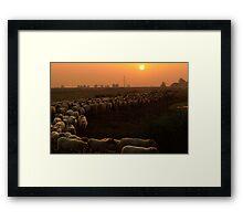 A herd of sheep Framed Print