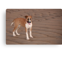 Bella on the beach Canvas Print