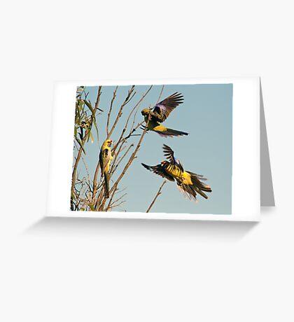 Yellow Crimson Parrots Greeting Card