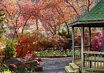 Down The Garden Path by Carolyn  Fletcher