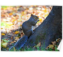 one squirrell Poster