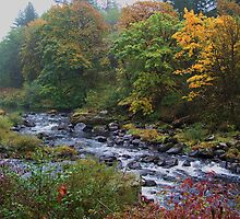 The Flow Of Fall by Charles & Patricia   Harkins ~ Picture Oregon