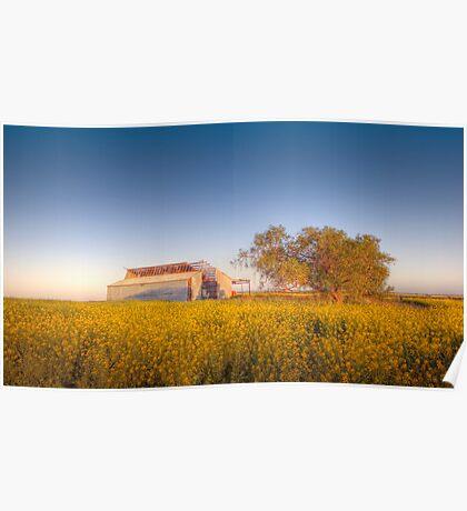 Barn yard Canola field of Sunshine  Poster