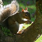 Enjoying my nut  by Ann Persse