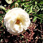 """""""Painted Blossom"""" by Anthony Cherubino"""