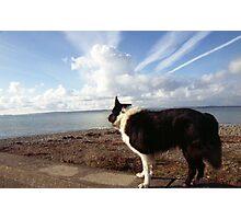 Indy looks to the horizon Photographic Print