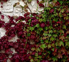 Botany 9 by Roddy Fitzgerald