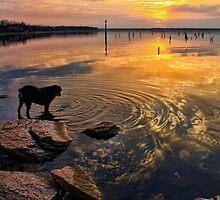 Sunset With Etta by Carolyn  Fletcher